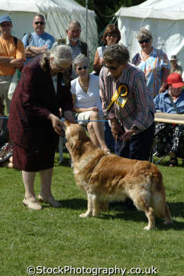 dog judging royal cornwall farming countryside rural south west england southwest country english uk cornish great britain united kingdom british