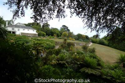 trebah gardens cornwall. mons darrenii lawn path uk parks environmental cornwall cornish england english great britain united kingdom british