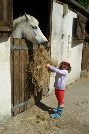 child feeding horse hay rural britain countryside rustic pastoral environmental ride learn cornwall cornish england english angleterre inghilterra inglaterra united kingdom british