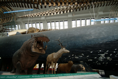 mammal section natural history museum london museums galleries buildings architecture capital england english united kingdom british