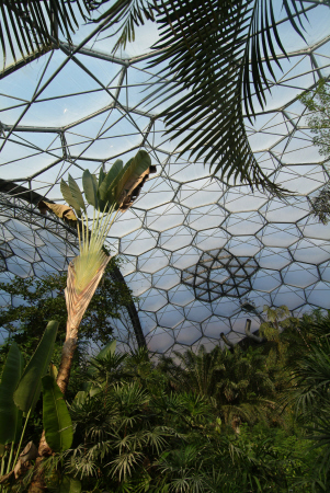eden project banana palm rainforest biome tourist attractions england english botanical garden attraction architectural geodesic dome cornish cornwall angleterre inghilterra inglaterra united kingdom british
