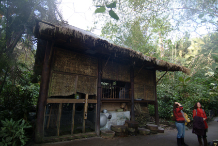eden project malaysian house inside rainforest biome tourist attractions england english botanical garden attraction architectural geodesic dome cornish cornwall angleterre inghilterra inglaterra united kingdom british