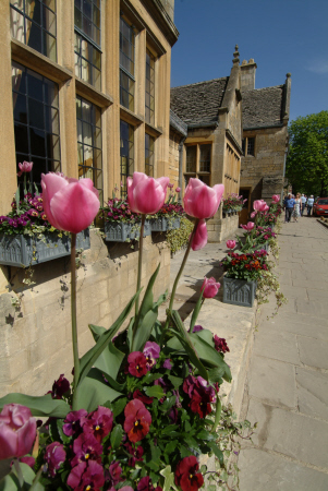 tulips broadway worcestershire flowers gloucestershire england english angleterre inghilterra inglaterra united kingdom british