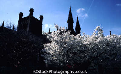 chester cathedral spring blossom uk cathedrals worship religion christian british architecture architectural buildings bloom bud cestrian cheshire england english angleterre inghilterra inglaterra united kingdom