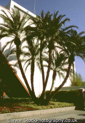 unusual palm tree building trees wooden natural history nature misc. orlando florida usa united states america american