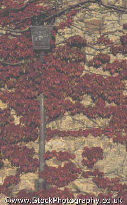 wall red ivy lampost walls abstracts misc. cyprus europe european cypriot