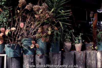 plant pots logs plants plantae natural history nature misc. sunbaked rustic cyprus europe european cypriot