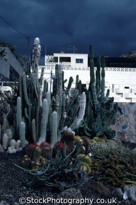 cactii tenerife plants plantae natural history nature misc. canary islands spikey spain spanien españa espagne la spagna europe european spanish