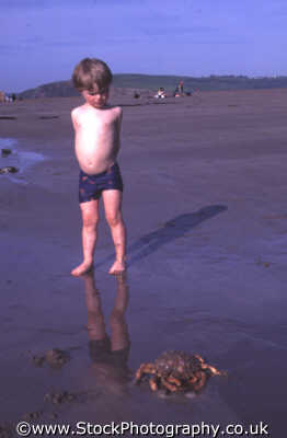 boy beach looking crab british beaches coastal coastline shoreline uk environmental trepidation wary curious devon devonian england english angleterre inghilterra inglaterra united kingdom