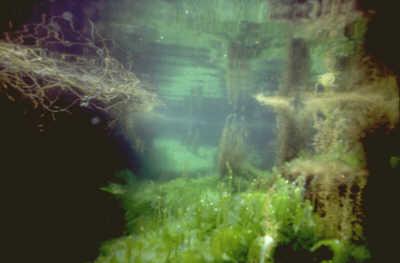 rockpool seascapes scenery scenic underwater marine diving dorset england english angleterre inghilterra inglaterra united kingdom british