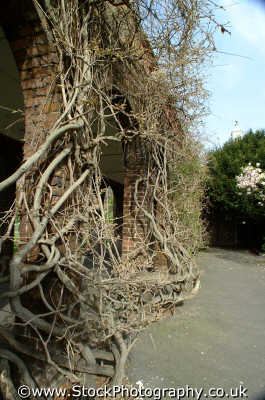 arches tangled vines holland park w.11 w 11 w11 london parks capital england english uk kensington chelsea cockney angleterre inghilterra inglaterra united kingdom british
