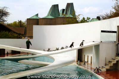penguin colony london zoo famous sights capital england english uk westminster cockney angleterre inghilterra inglaterra united kingdom british
