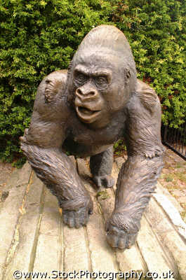 guy gorilla statue london zoo famous sights capital england english uk ape silverback westminster cockney angleterre inghilterra inglaterra united kingdom british