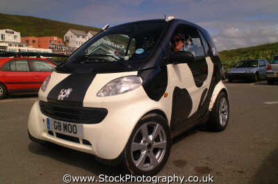 smart car custom registration number g8 moo motor cars automobiles transport transportation uk spotty spotted cows dairy devon devonian england english angleterre inghilterra inglaterra united kingdom british