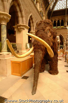 woolly mammoth university oxford museum uk museums british architecture architectural buildings prehistoric extinct oxfordshire home counties england english angleterre inghilterra inglaterra united kingdom