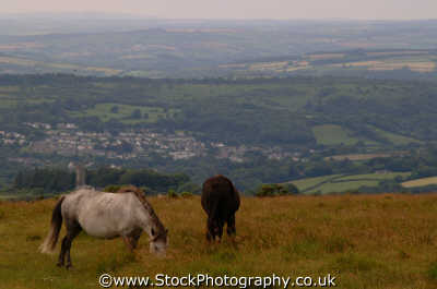 ponies dartmoor moorland countryside rural environmental uk moors devon devonian england english angleterre inghilterra inglaterra united kingdom british