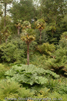 lost gardens heligan jungle valley tree ferns gardening horticulture tourist attractions england english uk foliage cultivation shrubs woodland cornish cornwall angleterre inghilterra inglaterra united kingdom british