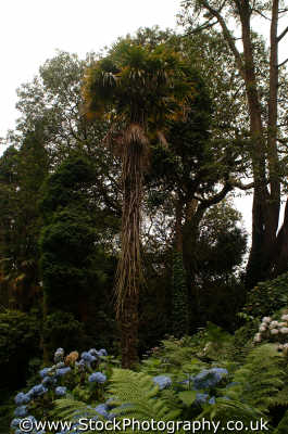 lost gardens heligan jungle valley tree gardening horticulture tourist attractions england english uk foliage cultivation shrubs woodland cornish cornwall angleterre inghilterra inglaterra united kingdom british