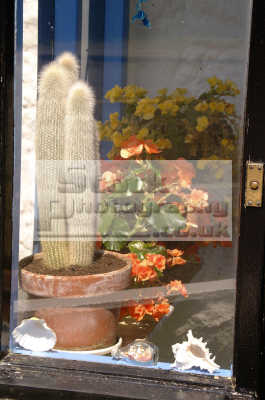 cactii porch window abstracts misc. cornwall cornish england english angleterre inghilterra inglaterra united kingdom british