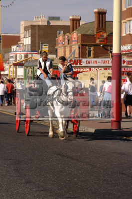 blackpool golden mile horse carriage ride north west northwest england english uk holidays seaside lancashire lancs angleterre inghilterra inglaterra united kingdom british
