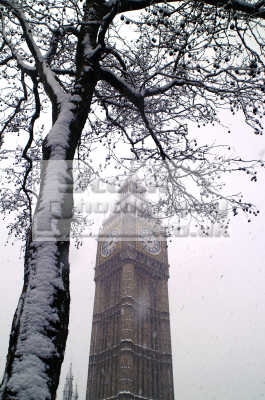 big ben snow covered tree blizzard parliament square famous sights london capital england english uk winter weather westminster cockney angleterre inghilterra inglaterra united kingdom british