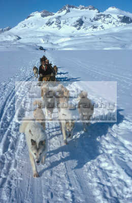 dog sledges travelling sea ice lightweight flexible used east greenland travel mountains. arctic climbing mountain peak adventure wilderness cold dogs sledging sled people snow husky brown eye blue expedition greenlander