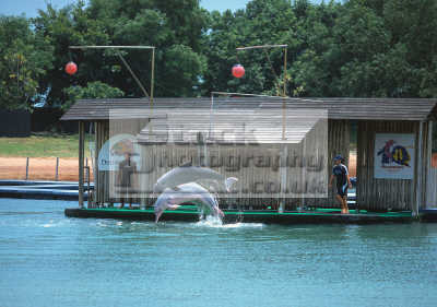 singapore sentosa island dolphins asian travel dolphinarium asia