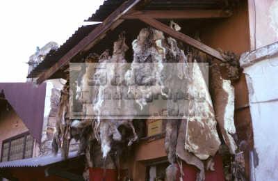 animal skins sale witch doctor pharmacy marrakesh souk bazaar morocco moroccan african travel ritual voodoo maroc africa