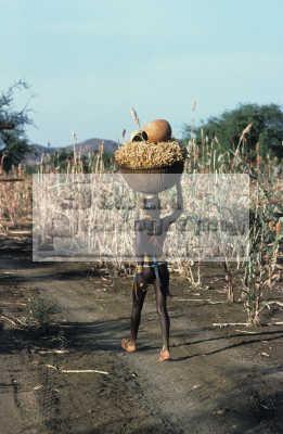 nuba tribe girl carrying basket millet stalks pots head. south kadugli sudan indiginous people african travel africa sudanese