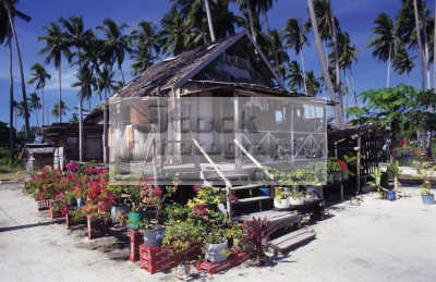 flowers house badjao tau-laut tau laut taulaut sea gypsies settled. pulau mabul sabah malaysia borneo. palm trees indiginous people asian travel borneo asia malaysian