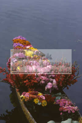 flowers sale shikara boat lake dal srinagar kashmir india. indian asian travel india asia