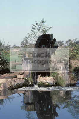 water wheel irrigation fields orchards fayoum egypt. african travel agriculture agricultural egypt pharoh middle east egyptian