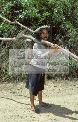 woman rungus tribe collecting firewood chewing betel nut mompilis longhouse kadazan people near kudat sabah. borneo malaysia. indiginous asian travel malaysia asia malaysian