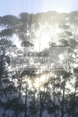 trees mist new zealand pacific travel bay islands dawn sunlight northland oceanic sea oceans kiwi