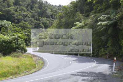road coromandel pacific travel northland north island bend palm trees oceanic sea oceans new zealand kiwi