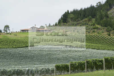 vineyard estate new zealand pacific travel wine oceanic sea oceans kiwi