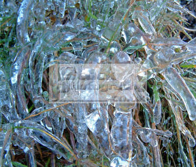 water droplets formed icicles grass reeds freezing winter weather. plants plantae natural history nature misc. ice cold shiney frozen icy scotland scottish scotch scots escocia schottland united kingdom british