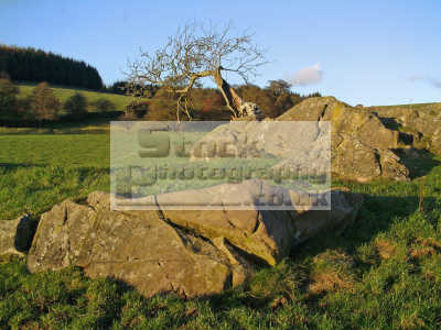 tree appears grow solid rock trees wooden natural history nature misc. dumfries galloway dumfrieshire dumfriesshire scotland scottish scotch scots escocia schottland united kingdom british