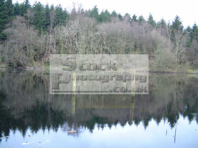 tiny glengar loch remains jetty used fishing. bank conifers stand sentinal bckground british lakes countryside rural environmental uk penpont dumfries galloway scotland water je dumfrieshire dumfriesshire scottish scotch scots escocia schottland united kingdom