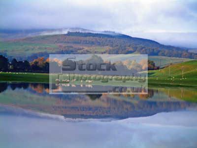 reflection flood water sheep hills british lakes countryside rural environmental uk mirrored dumfries galloway dumfrieshire dumfriesshire scotland scottish scotch scots escocia schottland united kingdom