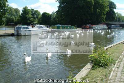 newbury kennet avon canal wharf uk rivers waterways countryside rural environmental berkshire england english angleterre inghilterra inglaterra united kingdom british