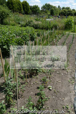 allotments agriculture farming natural history nature misc. gardening surrey england english angleterre inghilterra inglaterra united kingdom british