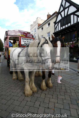 salisbury shire horse tour uk towns environmental wiltshire wilts england english great britain united kingdom british