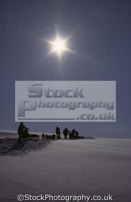 dog sledging silhouette near kngmuit east greenland. glistening hard ice arctic travel greenland greenlander