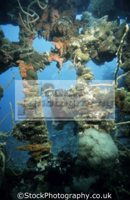 diver gunter bernert superstructure shallow water wreck ex woodern fishing boat coron island palawan philippines pacific ocean. near entrance barracuda lake wrecks seascapes scenery scenic underwater marine diving sudan africa philippino