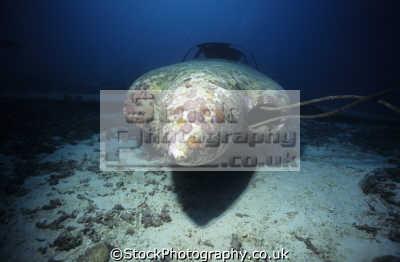 aircraft wreck hull lancair kit plane panagsama beach moalboal cebu island visayas philippine wrecks seascapes scenery scenic underwater marine diving sudan africa philippines philippino
