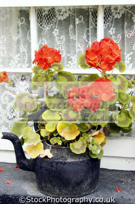 bunratty folk park limerick abstracts misc. kettle flowers luimneach republic ireland eire irish irland irlanda europe european