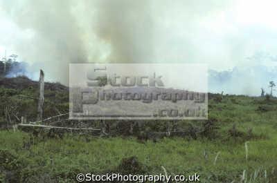 slash burn clear land planting oil palm elaeis guineensis jacq. jacquin british north borneo. agriculture farming natural history nature misc. deforestation global warming co2 borneo malaysia asia maldives maldivian
