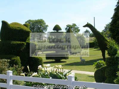 topiary french country garden. plants plantae natural history nature misc. limousin corr ze correze france la francia frankreich europe european