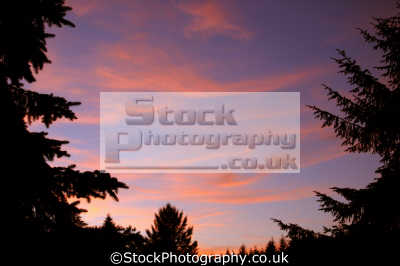 pink cirrus clouds lit setting sun. sky natural history nature misc. weather meteorology red wispy sunset england english great britain united kingdom british